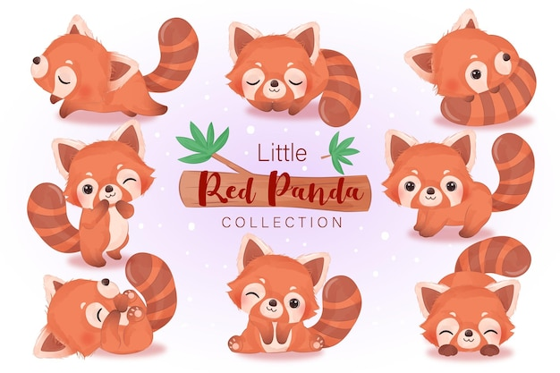 Adorable ilustración de panda rojo en acuarela para decoración infantil