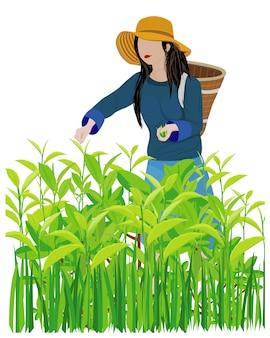 Agricultor cosecha hojas de té diseño vectorial