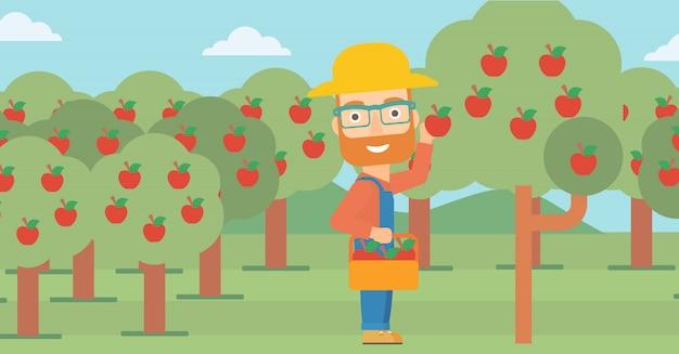 Agricultor recogiendo manzanas