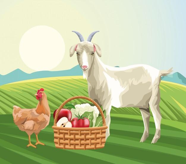 Agricultura cabra gallina y cesta cosecha frutas verduras