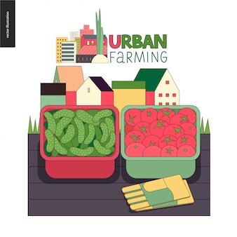Agricultura urbana y jardinería - pepinos y tomates.