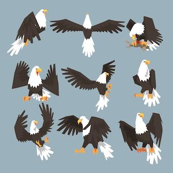 Un águila calva un conjunto de imágenes de caza sobre fondo gris