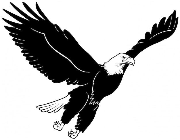 Águila calva voladora