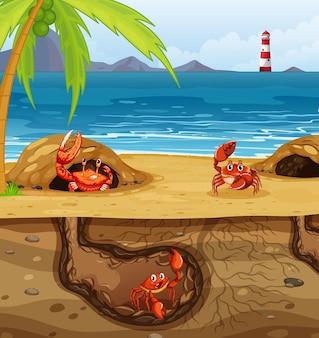 Agujero de animal subterráneo con muchos cangrejos.