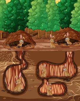Agujero de animal subterráneo con muchos conejos.