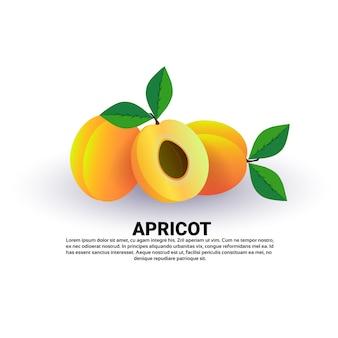 Albaricoque sobre fondo blanco, estilo de vida saludable o concepto de dieta, logotipo para frutas frescas