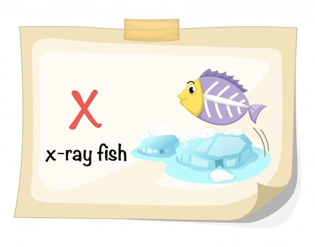 Alfabeto animal letra x para vector de ilustración de peces de rayos x