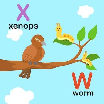 Alfabeto letra w para gusano, x para xenops, ilustración