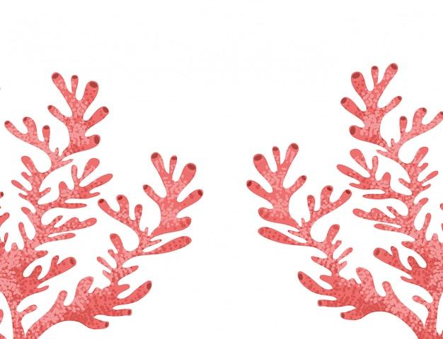 Algas marinas aisladas