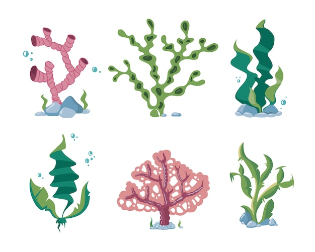 Algas submarinas