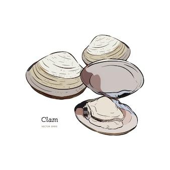 Almejas, mejillones, mariscos, ilustración de vector de estilo de dibujo.