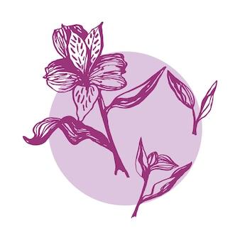 Alstroemeria realista único dibujado a mano lindo. flores de primavera tradicionales en estilo tinta para decoración y arreglos de bodas.
