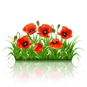 Amapolas rojas en hierba.