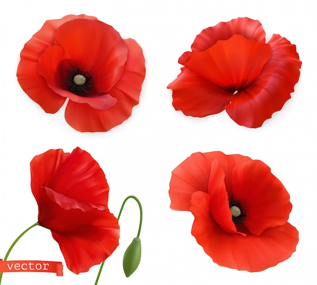 Amapolas rojas papaver flores 3d conjunto de iconos de vector realista