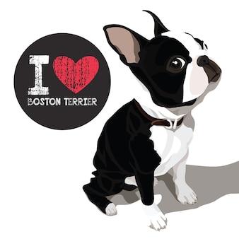 Amo boston terrier