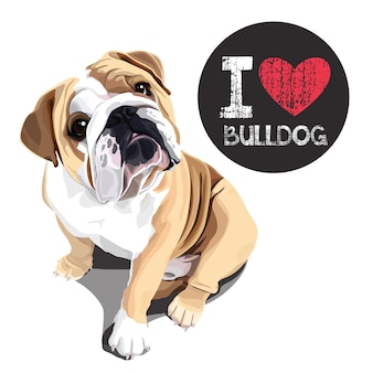Amo el bulldog