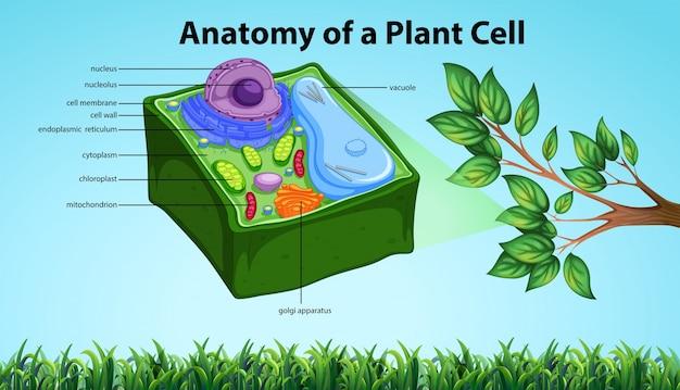 Anatomía de la célula vegetal con nombres