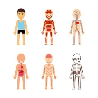 Anatomía del cuerpo ilustración vectorial