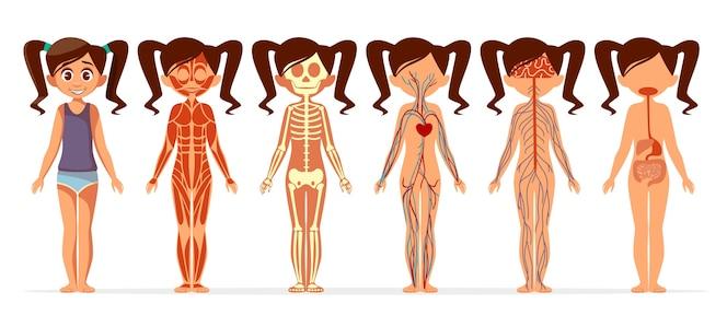 Anatomía del cuerpo de la niña. dibujos animados médica femenina cuerpo humano estructura muscular