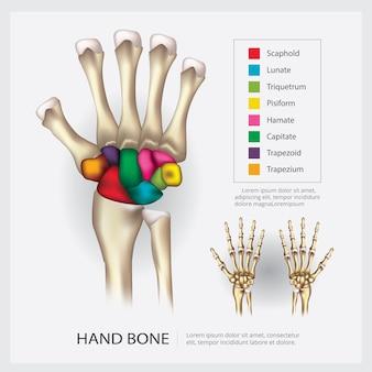 Anatomía humana mano hueso vector ilustración