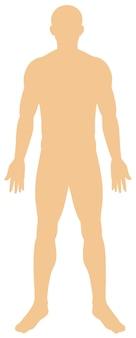 Anatomía humana sobre fondo blanco.