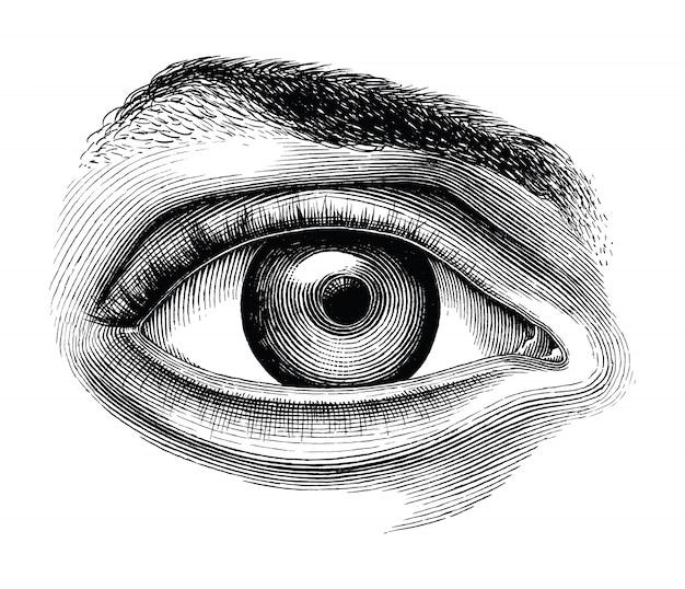 Anatomía de la mano del ojo humano dibujar imágenes prediseñadas vintage aislado sobre fondo blanco.