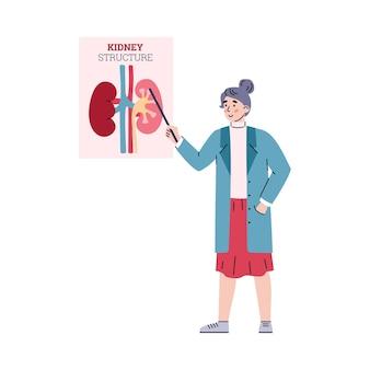 Anatomía del riñón con estructura de arterias y venas del órgano interno humano