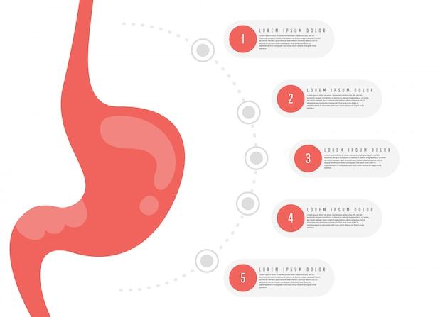 Anatomía del sistema digestivo.