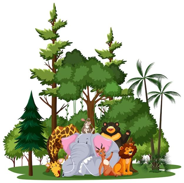 Animal salvaje o grupo de animales de zoológico con elementos de la naturaleza sobre fondo blanco
