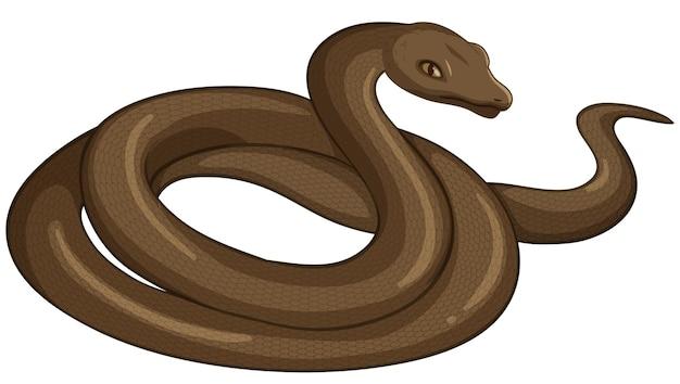 Animal serpiente sobre fondo blanco.