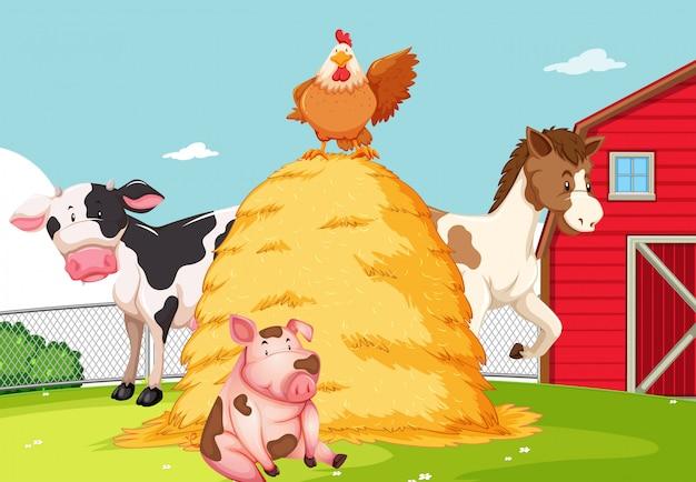 Animal en las tierras de cultivo