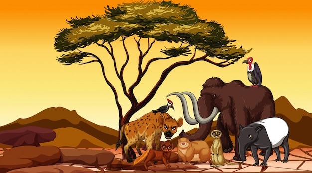 Animales africanos en el campo
