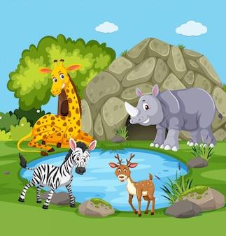 Animales alrededor de un estanque