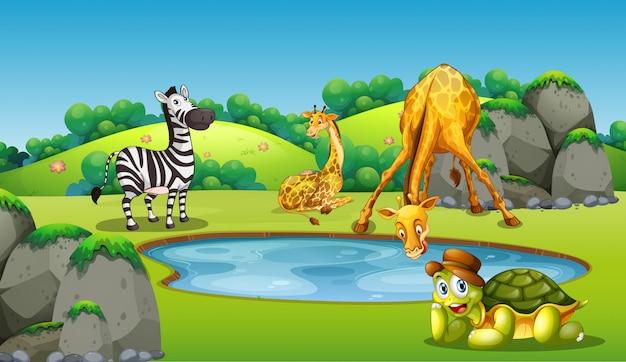 Animales alrededor de la escena del estanque