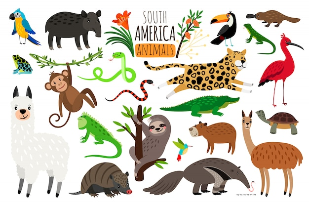 Animales de america del sur.