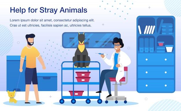 Animales callejeros ayudan en la clínica veterinaria banner