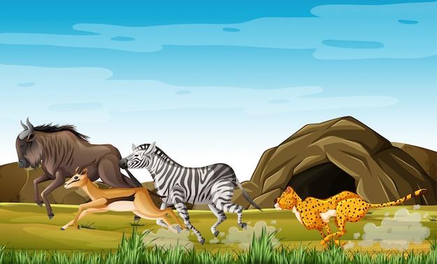 Animales de caza de leopardo en personaje de dibujos animados sobre fondo de bosque