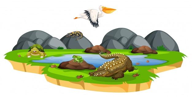 Animales cerca de la escena del estanque