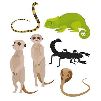 Animales del desierto africano