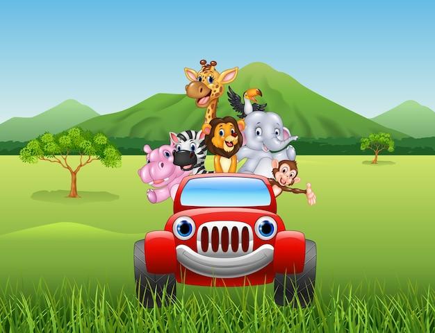 Animales de dibujos animados áfrica en el coche rojo