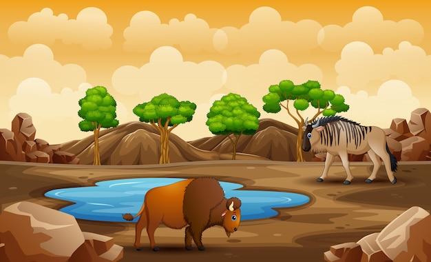 Animales de dibujos animados en la tierra seca
