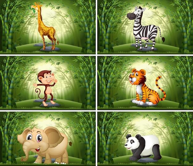 Animales en escena de bambú.