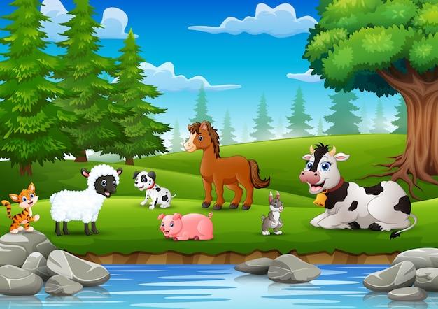 Los animales de granja disfrutan de la naturaleza junto al río.