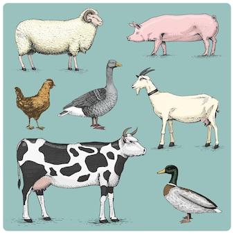 Animales de granja domésticos grabados, ilustración dibujada a mano en estilo scratchboard grabado en madera