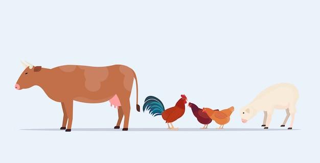 Animales de granja pastando vaca ovejas pollo diferentes animales domésticos cría concepto de agricultura fondo blanco horizontal