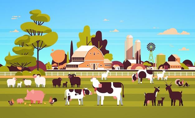 Animales de granja pastoreo vaca cabra cerdo pavo oveja pollo diferentes animales domésticos cría agricultura tierras de cultivo granero paisaje rural