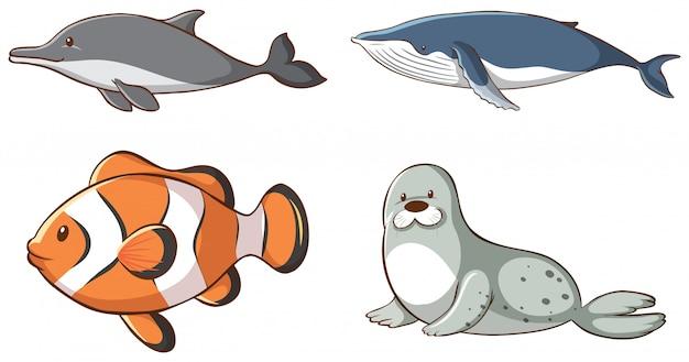 Animales marinos aislados