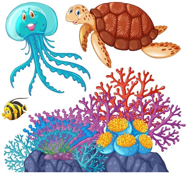 Animales marinos y arrecifes de coral.