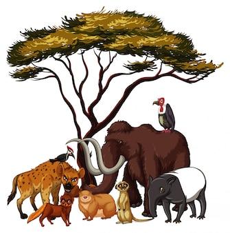Animales salvajes aislados debajo del árbol