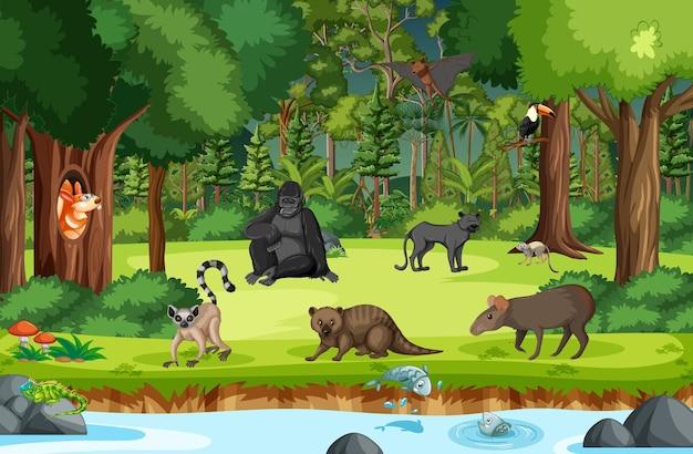 Animales salvajes con arroyo que fluye a través de la escena del bosque.